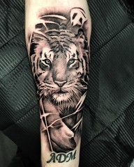 Photo of For Andy. Done at Far Beyond, Luton. Thankyou mate! #tiger #silverbackink #blackandgreytattoo