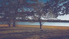 Étang de Vioreau. (Sohmi ︎) Tags: landscape paysage nature arbres trees loireatlantique bretagne britain findejournée endoftheday couleur colors water eau sky ciel perspective ombres shadows nikond810 beautyofthenature serenity calme quiet ©sohmi