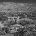 Rincon Mountain District of Saguaro National Park (Black & White)