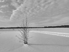 Одиночество, тишина. Корни дерева в мерзлой земле..