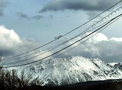 birds flying in snowy mountains (Ola 竜) Tags: mountains snow snowy peaks snowymountain winter birds flight animals silhouettes cables electricitylines trees mountainlayers cold bluish flying landscape blue sky gray clouds skyscape composition lines outside