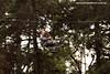 Inverno a brasileira (portaldmoto) Tags: heritage bike harley harleydavidson moto viagem hd custom badenbaden inverno turismo bikers motocicleta pinheiros motociclista araucária camposdojordão motociclismo motoqueiro mantiqueira serradamantiqueira motoca capivari santoantoniodopinhal monteirolobato marcosduarte mototurismo borboletário jaguaribe viagemdemoto pinheirais motoviagem suíçabrasileira heritage1600 dmoto portaldmoto turismodemoto sabordaprovíncia