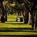 150618-golfers-cart-trees-lost.jpg