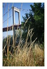 Bords d'Eau, Pont d'Aquitaine (titou du Pian) Tags: vert pontdaquitaine hautcontraste naturedanslaville