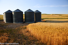 Palouse Granary (ramviswanathan) Tags: landscape photos wheatfields palouse steptoe