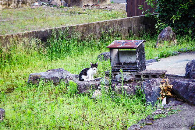 Today's Cat@2015-07-25
