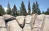 2015-180 (biosfear) Tags: tahoe humanvsnature
