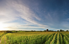 iStock_000019609792Large (Jessica_PFP) Tags: iowa panorama bluesky corn country green midwest road rollinghills summer sunrise nopeople outside outdoors silo clouds blue yellows dirtpath landscape cornfields fieldofcorn rowsofcorn agriculture agricultural farm farming open vast farmer farmerswork