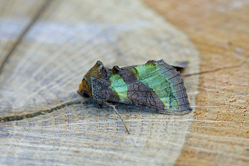 Burnished Brass, Shipham, Somerset, England