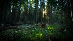 Vercors, foret profonde (Alexandre Carpentier) Tags: vercors landscape foret green sunstar rando tourisme grenoble nature paysage best