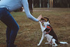 IMG_4789.jpg (letsgoeddie) Tags: dylanthedog dog highfive park denise tampa florida walk