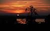 (Tiiasusa) Tags: sunset sky helsinki lauttasaari finland summer tree sea outdoor dusk