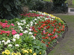 Colourful Flowers, Hyde Park, London, Feb 2016, Explored (allanmaciver) Tags: flowers colours london england city central capital red white green arrangement allanmaciver hyde park