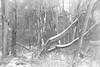 Woods in Winter (dorameulman) Tags: winter january woods snow landscape gastonia northcarolina inmybackyard dorameulman outdoor trees monochrome blackandwhite