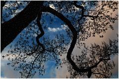 Arbre décoré (gabard.nadege) Tags: noêl arbre guirlandes lumières reims