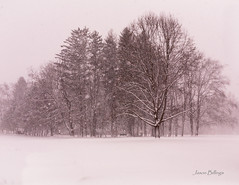 Lake Effect Snow Storm (jasonbillings677) Tags: storm trees new york lake effect snow winter canon 2470 f71 5d