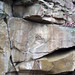 Byer Sandstone (Lower Mississippian; State Farm Quarry, Newark, Ohio, USA) 4