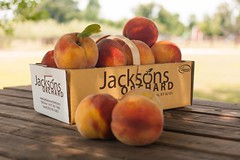 Contender--3 (Jackson's Orchard) Tags: kentucky peach orchard bowlinggreen contender bowlinggreenky jacksonsorchard
