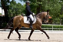 CCVM - Doma Clsica (Myprofe) Tags: madrid horse caballo equestrian dressage domaclsica clubdecampovillademadrid ccvm campeonatosdeespaa