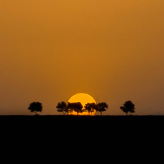 _DSC0041 (mehrzad ansari pour) Tags: sunset tree silhouette