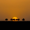 _DSC0041 (mehrzad ansari pour) Tags: sunset tree silhouette نور درخت غروب ضد