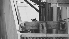 à l'abri des regards (A.B.S Graph) Tags: ocean camping white black beach cat chat noir plage blanc rabat abri curieux