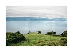 Pico, Aores (Sr. Cordeiro) Tags: ocean portugal field landscape island nikon view cows meadow paisagem atlantic pico vista campo prado nikkor v1 ilha azores vacas oceano aores atlntico 11275mm