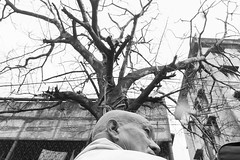 Tree (Soumyendra Saha) Tags: india man tree streetphotography explore kolkata kalighat gauntletcspa121upsp