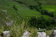 Gordale Scar grass - near and far