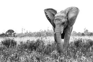 03 Knysna Elephant Park 006