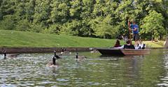 River Cam at Cambridge (AnthonyR2010) Tags: cambridge river university cam goose punting canadagoose punt rivercam wildfowl