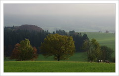 Paix automnale / Suisse romande (PtiteArvine) Tags: automne arbre forts vaches campagne srnit calme romandie suisse cantondefribourg