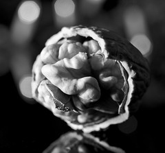 Walnut under the Christmas tree! (bw) HMM! (G. Lang) Tags: macromondays schwarzweis sonyilce7m2 noiretblanc walnut holidaybokeh macro monochrome walnuss einfarbig blackandwhite blackwhite bokeh bw branches noyer forêtnoire sonya7ii makro sonyalpha7ii
