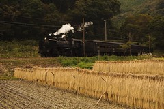 (MomoRingo58) Tags: jpn japan c56 大井川鐵道 蒸気機関車 steamlocomotive railways railway rail train 鉄道 鉄道写真