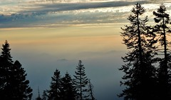 you fill up my senses... (BillsExplorations) Tags: sequoia sequoianationalpark sunset trees sky clouds landscape silhouette fog mist beauty california 2016 2017 nationalpark senses anniessong johndenver