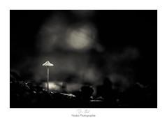 Au coeur de la nuit (Naska Photographie) Tags: naska photographie pp photo photographe paysage proxy proxyphoto macro macrophotographie macrophoto forest foret noir et blanc black white bn monochrome nuit seul mushroom champignon bokeh