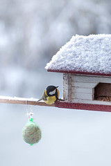 Anybody home? (mpakarlsson) Tags: bird winter white snow ice frozen frost food house season parus major great tit peek home falköping skaraborg sweden 5dii 5dm2 5dmark2 5dmarkii 70200 llens canon