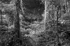 Gunung Mulu National Park, Borneo, Malaysia (bm^) Tags: travel gunungmulu sarawak maleisië borneo bako national park boom bomen tree trees distagont228 distagon282zf nikon d700 bw blackandwhite black white blackwhitephotos zf2 zeiss carl nikond700 zwart wit zwartwit reis carlzeiss my mountain berg mulu grot cave gunung