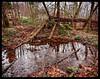 Icy pond (Geir Bakken) Tags: m43 mirrorless microfourthirds olympusmftzuikodigitaled918mm nature landscape forest woods pond water ice winter tree trees landskap perfectbeauty yabbadabbadoo norway norge vestfold