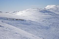 DSC_4988 (Dan_lazar) Tags: יום ski hermona mountain nature north israel snow שלג חרמון הר צפון גולן ישראל לבן אנשים