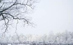 P1180050-12.jpg (loenatik) Tags: assel gelderland kootwijk nature nederland radiokootwijk sneeuw snow tree winter sky
