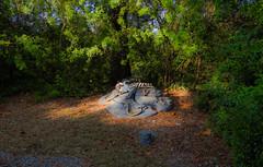 Wild fronteir (Duplicate Image) Tags: trees wildwest rattlesnakes serpents bones scales disneyworld predators deadleaves fronteirland fronteir green