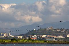 Cagliari e i suoi cormorani (AngeloM1975) Tags: cagliari sardegna sardinia cormorani fauna santa gilla stagno volo castello san michele