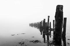 (Bjørn-Kristian) Tags: black white børsa trøndelag norge norway nikon d5 trondheim påler poles old fog tåke
