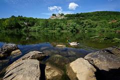 Karlsburg (mattrkeyworth) Tags: zeiss river duck spring main ruin ruine ente burg frhling karlsburg karlstadt flus mainfranken sonya7r variotessartfe41635 sel1635z