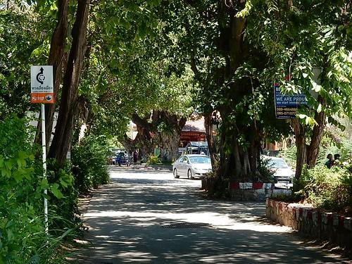 Pretty Shady Street