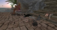 Kitties planning something (adevinesub) Tags: life sunset cats memories relaxing kitty sl secondlife kitties second resting timeless timelessmemories
