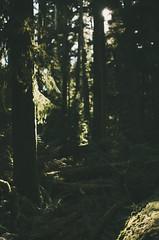 DSC_8641 (DeepLovePhotography) Tags: vancouverisland cathedralgrove macmillanpark explorebc deeplovephotography seanhelmn