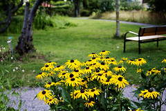 TheYellow Flower bed. (Saeed Nassbeh) Tags: park travel flowers plants lund tourism nature yellow sweden outdoor parks      europeantowns