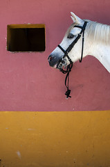 untitled (Levan Kakabadze) Tags: horse color spain espana